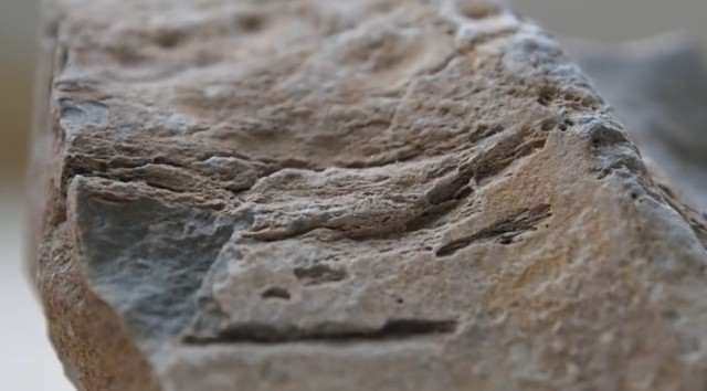 A fragment from the fossil of the prehistoric whale found near Bulgaria's Varna. Photo: TV grab from Vbox7
