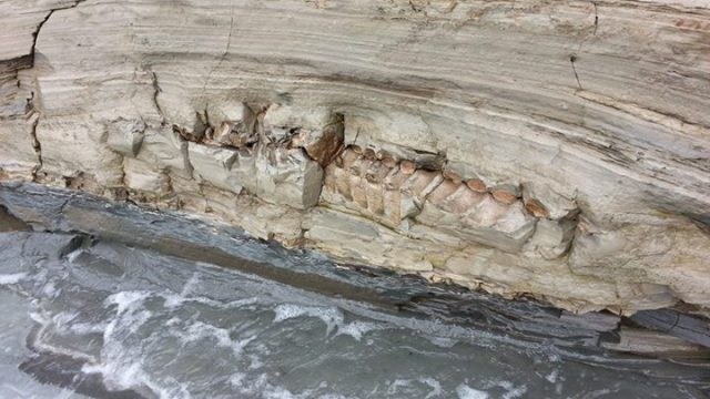 Bulgarian Paleontologists Find Prehistoric Whale Fossil on Black Sea Coast near Varna